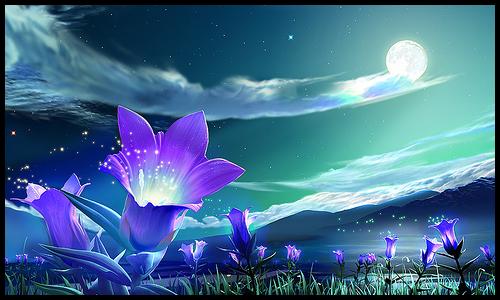 flores fecham noite